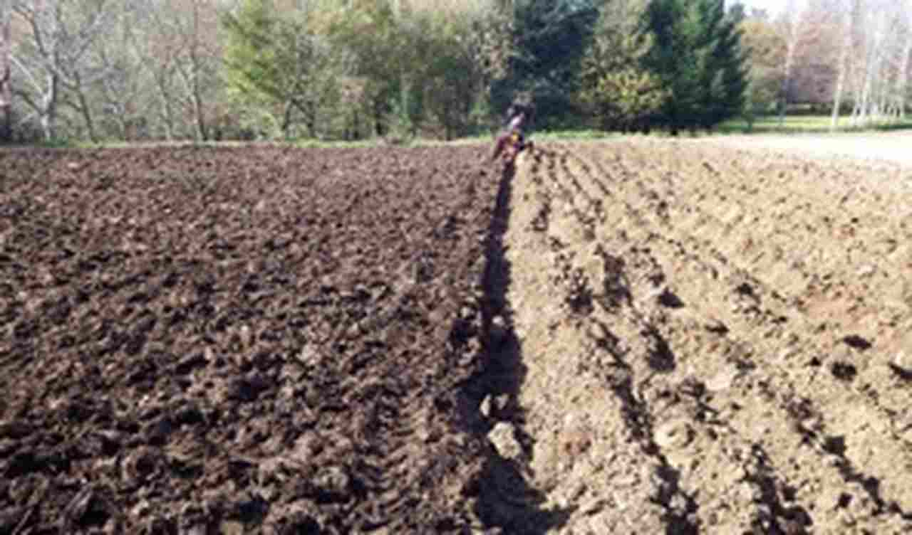 produzione-agricola-cucinadelleidee